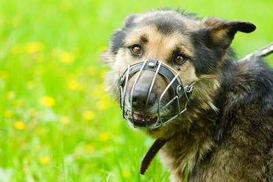 Jak dobrać kaganiec dla psa? - PORADY EKSPERTA