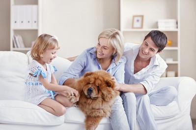 Najodpowiedniejsze zwierzaki dla rodzin z dziećmi