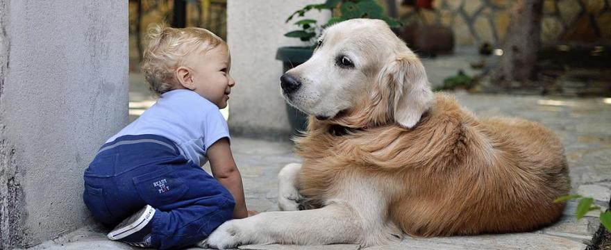 Dzieciństwo z psem dobrze wpływa na rozwój dziecka: FAKT czy MIT?