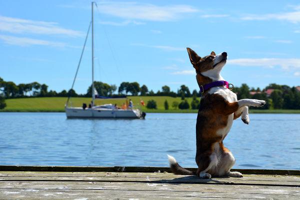Sesja fotograficzna na obozie z psem, organizowanym przez firmę ViaCamp s.c. w malowniczym miasteczku Ryn.
